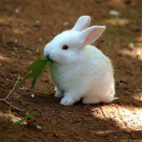 30 Cute Baby Animals That Will Make You Go Aww Fantastic88
