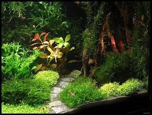 Moos Für Aquarium : sharplace aquarium moosgitter pflanzen halter f r moos wasserpflanzen aquarium prima ~ Frokenaadalensverden.com Haus und Dekorationen