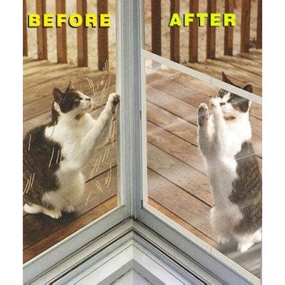 keeping cats  scratching screen doors thriftyfun