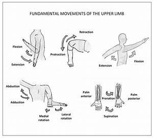 Anatomy Revision Of The Upper Limb  Lower Limb  U0026 Back