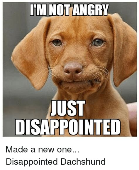 Disappointed Dog Meme - itm notangry ust disappointed made a new one disappointed dachshund disappointed meme on sizzle