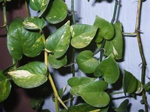 Plante Tropicale D Intérieur : trancheuse ~ Melissatoandfro.com Idées de Décoration