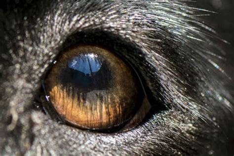 are all dogs color blind are dogs color blind american kennel club