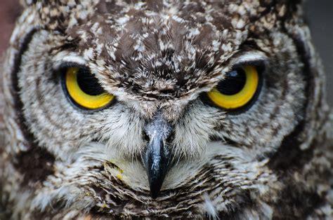 image gallery owl eyes