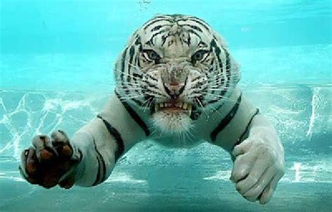 Best Images About Animals Underwater Pinterest
