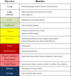 Muscle Meridian Chart
