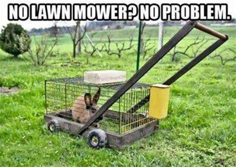Lawn Mower Meme - no lawn mower animal meme