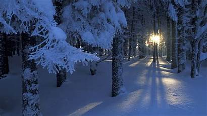 Winter Forest Wallpapers Wallpapertag 1080p