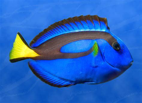 top   colorful aquarium fish fpsbutest