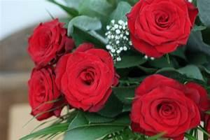 Begleitpflanzen Für Rosen : f r dich solls rote rosen regnen sch nes leben ~ Orissabook.com Haus und Dekorationen