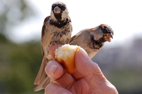 top  backyard bird feeding mistakes