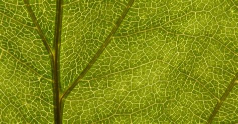 plant leaf cell structure ehow uk