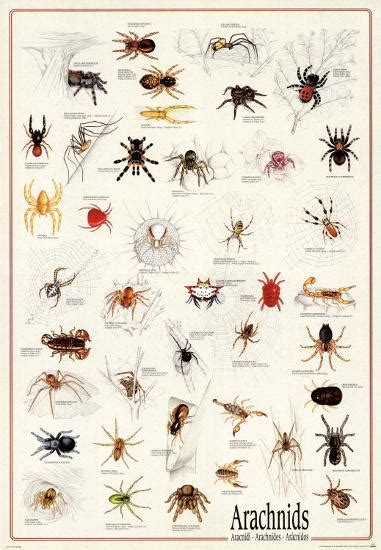 arachnids posters  allposterscom