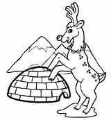 Igloo Coloring Winter Season Reindeer Printable Pages Getcolorings sketch template