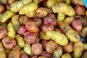 Weird Vegetables You've Probably Never Heard Of (PHOTOS ...