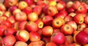 Apples  The Superfood U0026 39 S Health Benefits