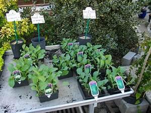 Planter Des Choux Fleurs : planter des melons ~ Melissatoandfro.com Idées de Décoration