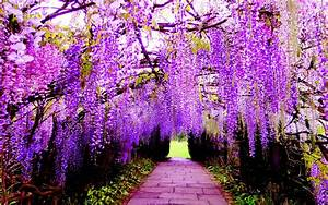 Hanging Flower Wisteria Purple Flowers Wallpaper For Pc  Tablet And Mobile Download 2880x1800