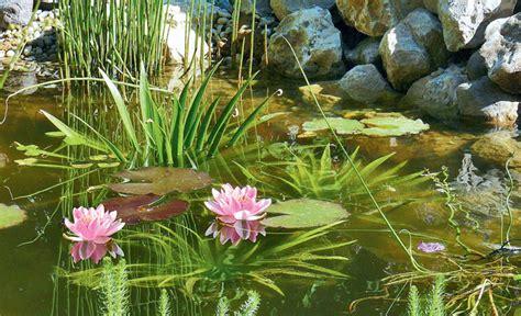 Gartenteich Tipps Fuer Die Pflege by Teichpflege Teich Anlegen Selbst De