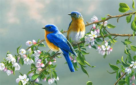 relaxing nature sounds quot birds singing in the morning