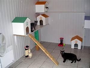 Maison Pour Chat Extérieur : pension pour chats chiens petits rongeurs et nac ~ Premium-room.com Idées de Décoration