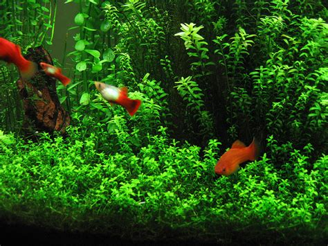fish n tips aquatic plants the science backstory