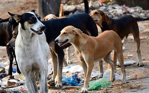 reasons    kill stray dogs  kerala meen