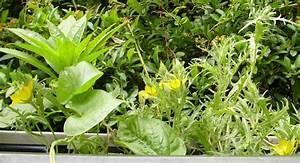Welche Blumen Blühen Im August : was bl ht bei euch gerade auf dem balkon im garten co seite 123 allmystery ~ Orissabook.com Haus und Dekorationen