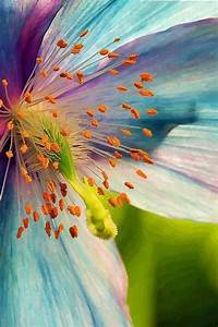 1000+ ideas about Macro Flower Photography on Pinterest ...