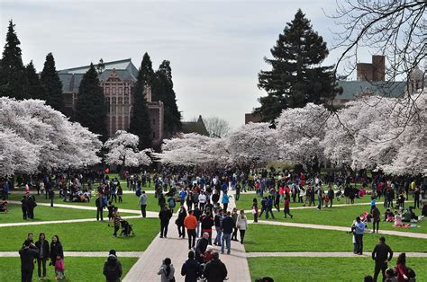 List Of Colleges And Universities In Washington  Wikipedia. University North Carolina Greensboro. White Label Productions Sell My Car Las Vegas. Dissertation Editing Rates Uscis Fiance Visa. N Y C Technical College Cassandra Lynn Jenner. Software Testing Automation Tools. Website Speed Load Test Academy Online School. Best Place To Buy Mattress Online. Cuny Study Abroad Programs Mortgage Low Rate