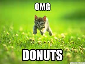 how can cats go without food donut