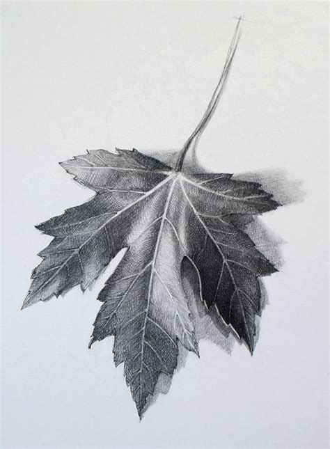 draw  leaf video lesson  drawing academy
