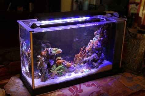 saltwater aquarium 5 gallon nano reef leonel619 5 gallon aquarium macroalgae aquariums 2017