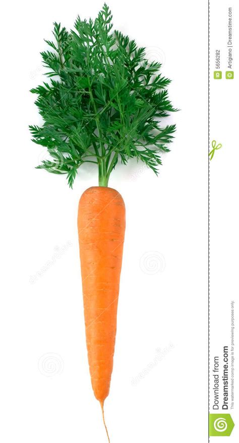 Fresh Photo by Fresh Carrot Stock Photography Image 5656282