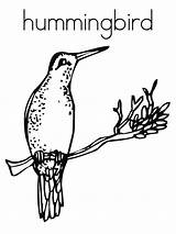 Coloring Pages Hummingbird Printable Birds Hummingbirds Bird Nest Colors Preschool Humming Sheets Letters Noodle Alphabet Easy Flowers Letter Verse Bible sketch template