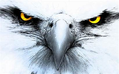 Eagle Eyes Yellow Eagles Wallpapers Bald Desktop