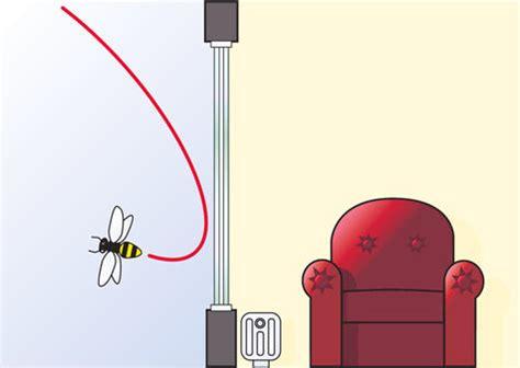 brotkäfer am fenster kleine fliegen am fenster hunderte kleine wei e durchsichtige fliegen m cken kleine fliegen am