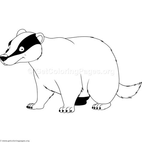 the honeybadger html page templates badger animal coloring pages staruptalent