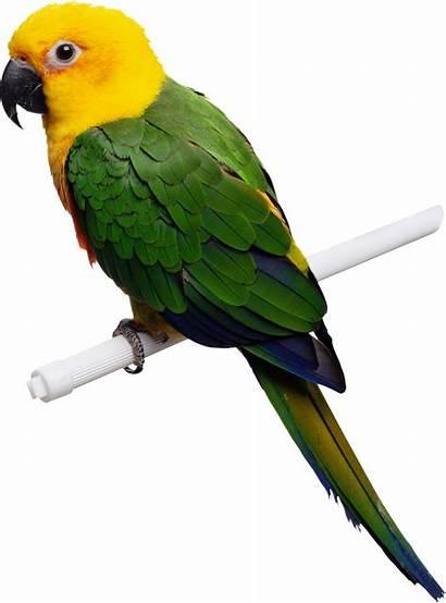 Parrot Pngimg Yellow