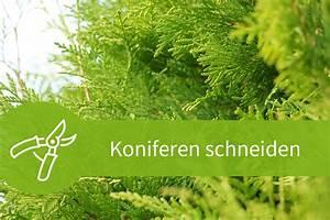 Eibe Schneiden Beste Zeit : koniferen schneiden 4 schnitte in 2 jahreszeiten ~ Frokenaadalensverden.com Haus und Dekorationen