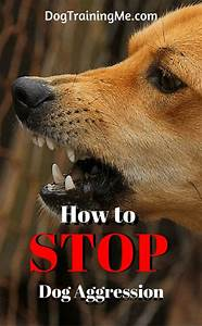 25 best ideas about dog behavior on pinterest dog care With dog training for aggressive dogs