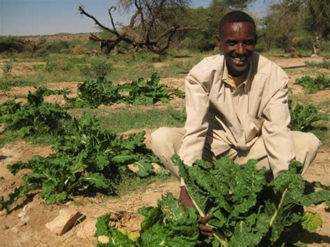 somali farmers improve domestic food production amisom