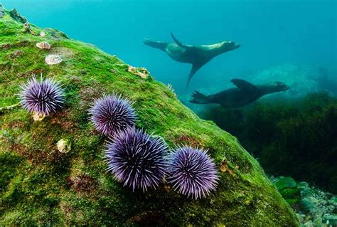 Marine Life Malibu Makos Surf Club