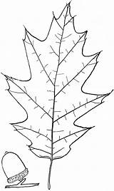 Trees Quercus Trunk sketch template