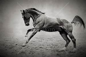 Equine Fine Art Photography Galloping Black Horse ...