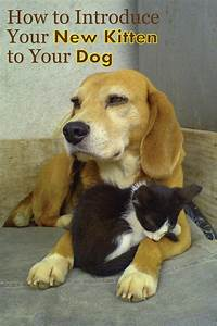 how do i introduce my new kitten to my dog your cats and With how to introduce a new puppy to your dog