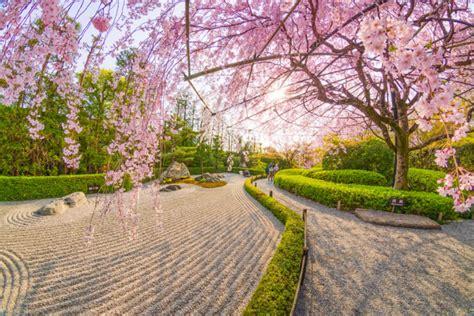 kyoto japan temple garden cherry tips info temples planning sakura blossoms guide travel