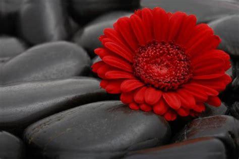 triptyque cuisine tableau moderne flower izoa