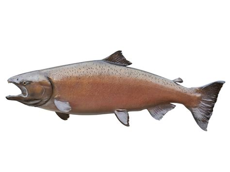 How To Buy The Best Salmon At The Grocery