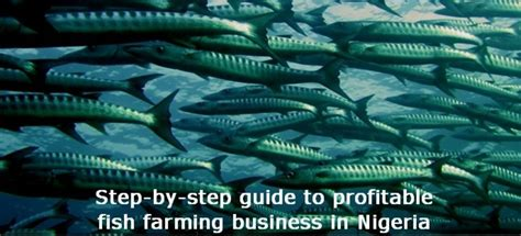 fish farming  nigeria step  step guide
